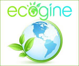 Ecogine.org : un moteur de recherche qui agit pour l'environnement